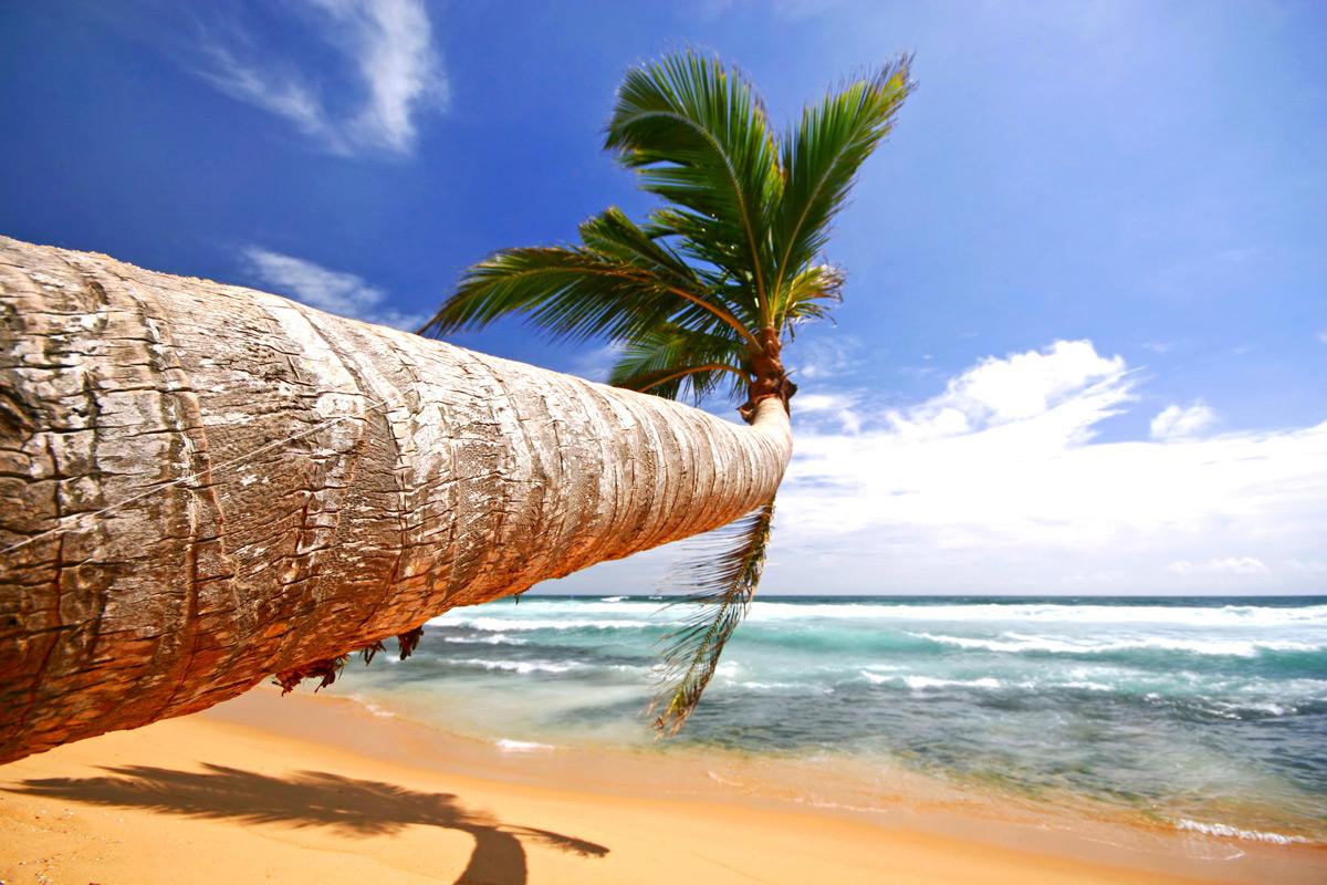 Виза в Шри-Ланку: готовимся к поездке заранее и с умом